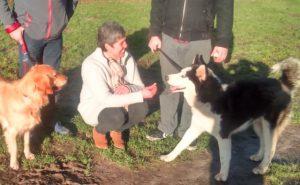 adoptie husky